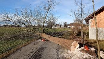 Comment débiter un arbre tombé ?